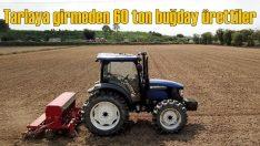 İngiltere'de tarlaya girmeden 60 ton buğday ürettiler